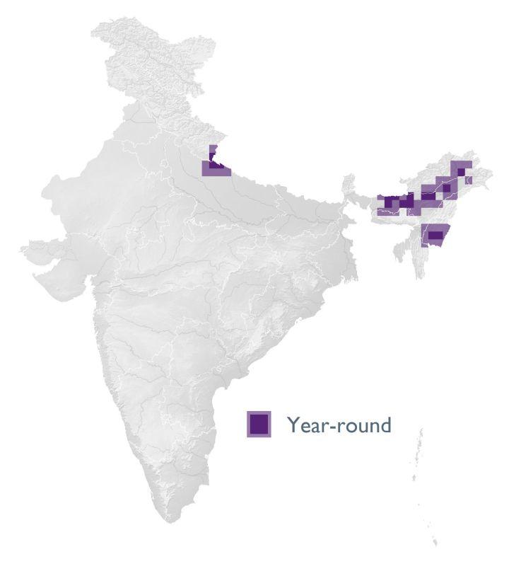 Indian Grass Babbler