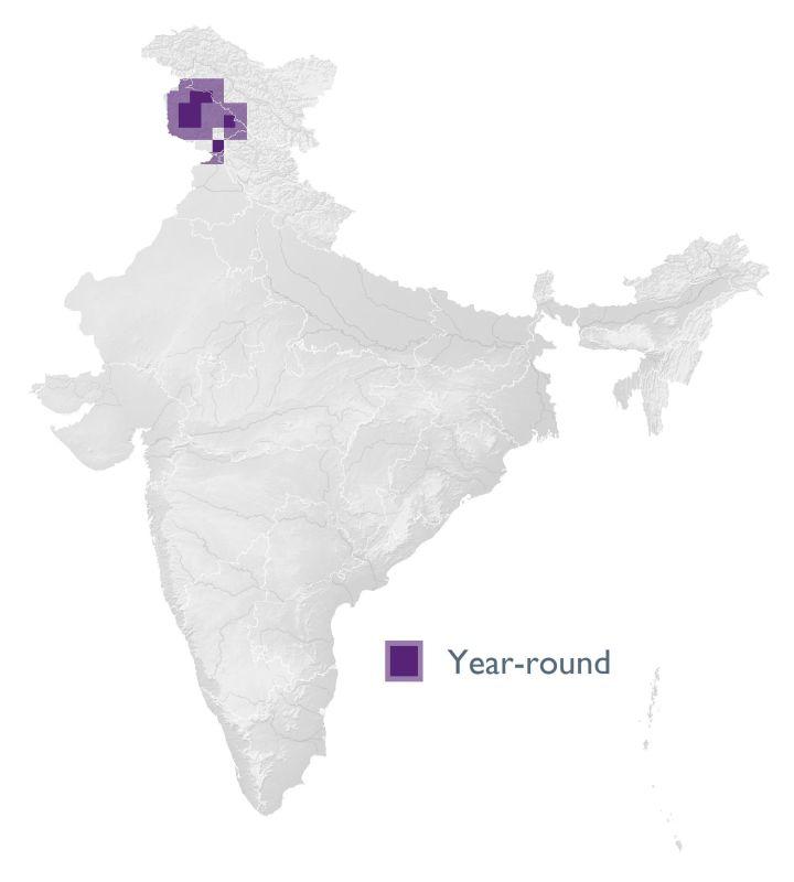 Kashmir Nuthatch